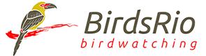 BirdsRio.com.br – Birdwatching Rio de Janeiro – Observação de Aves Brasil