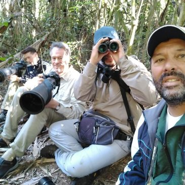 16 de Julho de 2018. Saída para fotografia de aves com o amigo e guia Benedito Freitas e seu clientes.
