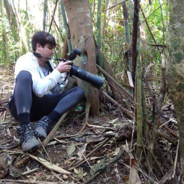 20 e 21 de agosto de 2018. Mostrando aves do Parque Nacional do Itatiaia e entorno para o amigo Pedro Junqueira.