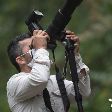 05 e 06 de Junho de 2020. Expedição para fotografia de aves na região do Parque Nacional do Itatiaia com o fotógrafo Ronaldo Rios.