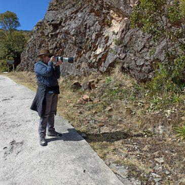 08 e 09 de Agosto de 2020 - Expedição para observação e fotografia de aves pelo Parque Nacional do Itatiaia com o casal Thelma Gatuzzo e José Antônio.