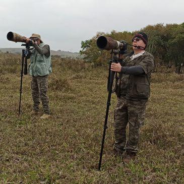 04 e 05 de Setembro de 2020 - Expedição para fotografia de aves pela região do Parque Nacional do Itatiaia e Serra da Bocaina com os fotógrafos Carlos Grupilo e Flávio Pereira