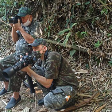 17 e 18 de Setembro de 2020 - Expedição para observação e fotografia de aves pelo Parque Nacional do Itatiaia e Serra da Bocaina com o Eduardo Nyari e seu pai Alberto Nyari.