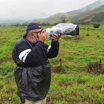 22 de Setembro de 2020 - Expedição para fotografia de aves por Penedo e Capelinha  com o Afonso Peres