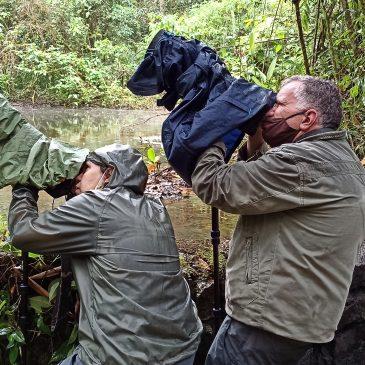 03 e 04 de Outubro de 2020 - Expedição para observação e fotografia de aves pelo Parque Nacional do Itatiaia com James e Belmira.