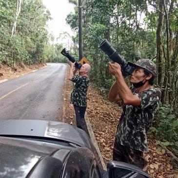 05 a 07 de Outubro de 2020 - Expedição para fotografia de aves pela região do Parque Nacional do Itatiaia, Serra da Bocaina, Serrinha do Alambari e Capelinha com os fotógrafos Luiz Antonio Moschini Souza e Jonatas Miatake