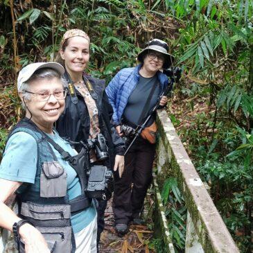 15 a 18 de Outubro de 2020 - Expedição para observação e fotografia de aves pelo Parque Nacional do Itatiaia e Serra da Bocaina com Lucia Rogers, Patrícia e Claudia Bretas.