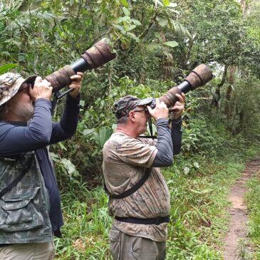 10 e 11 de Novembro de 2020 - Expedição para fotografia de aves pelo Parque Nacional do Itatiaia e Tremembé SP, com os amigos Hilton Filho e Ivan Cesar.