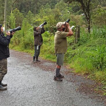 17 de Novembro de 2020 - Expedição para fotografia de aves pelo Parque Nacional do Itatiaia com o fotógrafo Robert Steinberg, sua esposa e o Paulo.