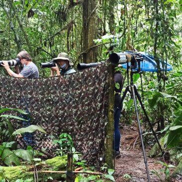 19 de Novembro de 2020 - Expedição para fotografia de aves pelo Parque Nacional do Itatiaia com o fotógrafo Ernani Oliveira..