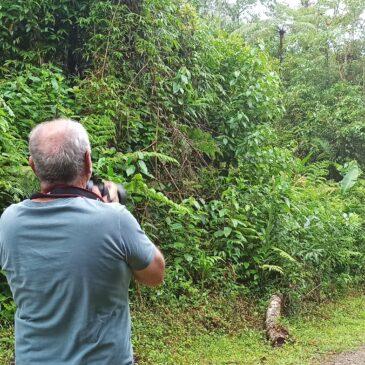 23 a 25 de Fevereiro de 2021 - Expedição para fotografia de aves pela Trilha dos Tucanos com o fotógrafo Luiz Eduardo.