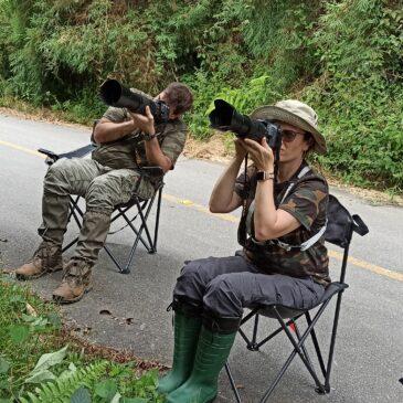 27 e 28 de Março de 2021 - Expedição para observação e fotografia de aves pela Serra da Bocaina com o casal Kadu e Sammy